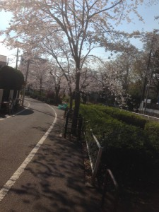 140331桜